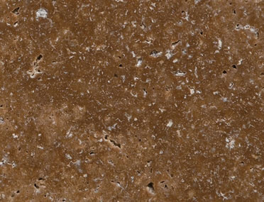 Coffee Travertine CC